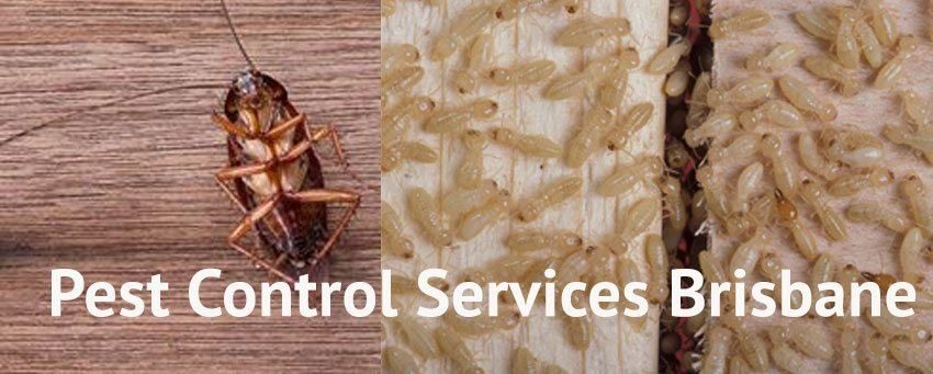 Pest Control Gowrie Junction