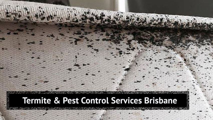 Termite and Pest Control Services Lower Cressbrook