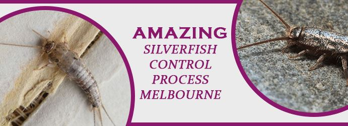 Silverfish Control Process in Melbourne