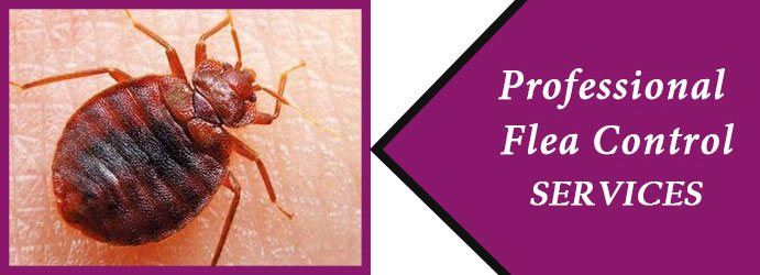 Best Flea Control in Brisbane