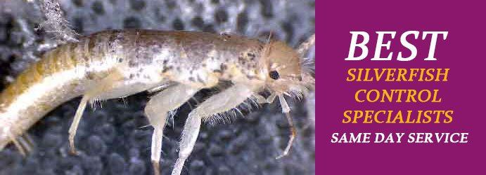 Best Silverfish Control Specialists in Melbourne