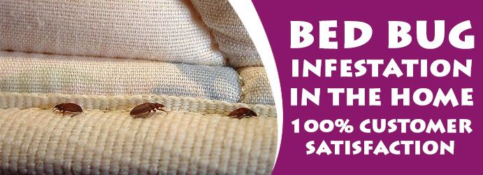 Bed Bug Infestation In the Home