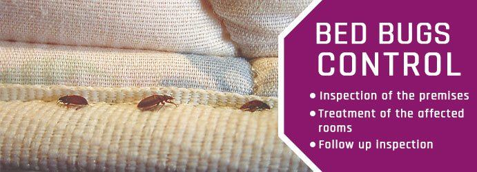 Bed Bugs Control White Patch