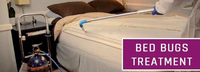 Bed Bugs Treatment Maroon