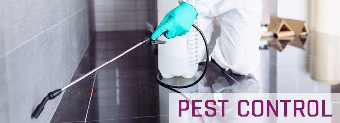 Pest Control Split Yard Creek