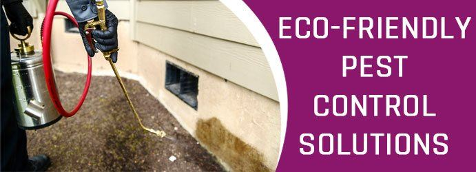 Pest Control Solutions Eagleby