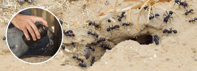 Residential Ants Pest Control