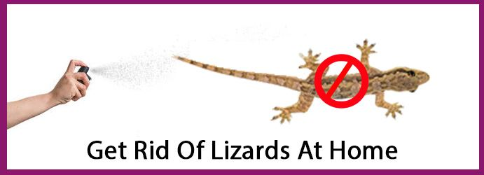 Get Rid Of Lizards At Home
