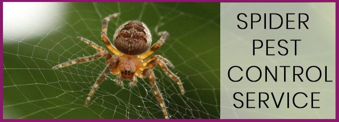 Spider Pest Control Limpinwood