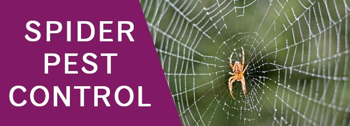 Spider Pest Control North Shore