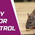 Simple And Easy Steps For Rat Control