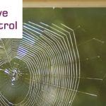 Control Spider Infestation At Home?