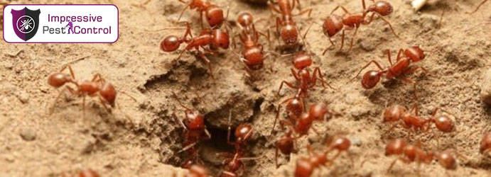 Ants Pest Control Top Camp