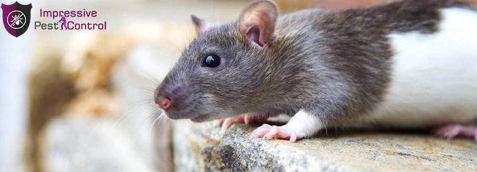 Mice and Rat Pest Control Witheren
