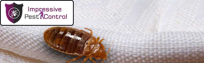 Bed Bug Control Panorama