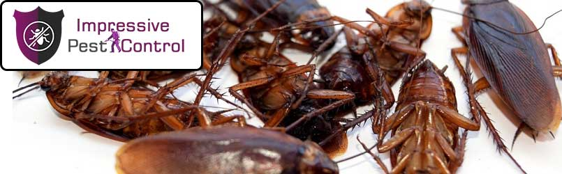 Cockroach Pest Control Claremont North