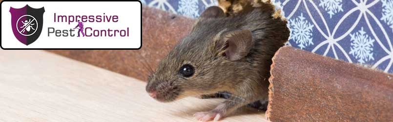 Mice and Rats Pest Control Doubleview