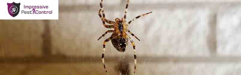 Spider Control Services Acton