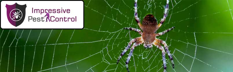 Spider Pest Control Holsworthy