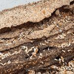 Importance of Termite Inspection in The Home