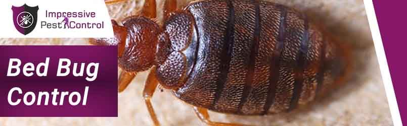 Expert Bed Bug Treatment