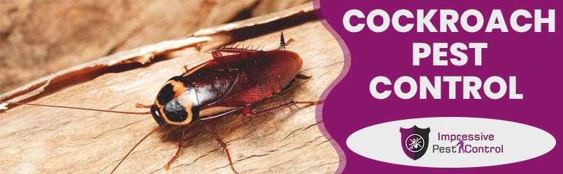 Cockroach Pest Control Longley
