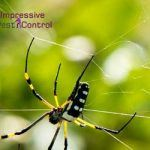 Answering Common Questions Related to Red Back Spiders