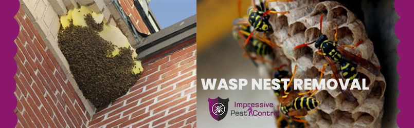 Wasp Nest Removal Rosny Park