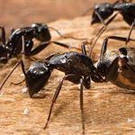 Interesting Facts you Should Know About Ants
