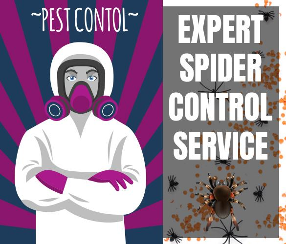 Expert Spider Control Services