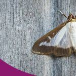 Keep Moths Away By Help of Professional Treatments