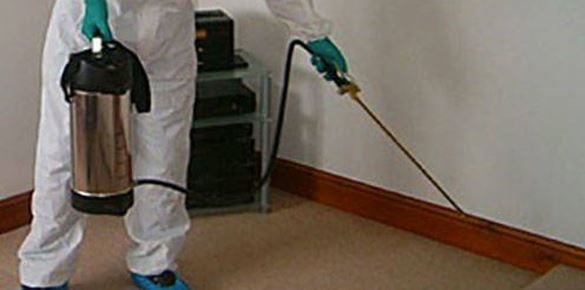 End of Lease Pest Control Services
