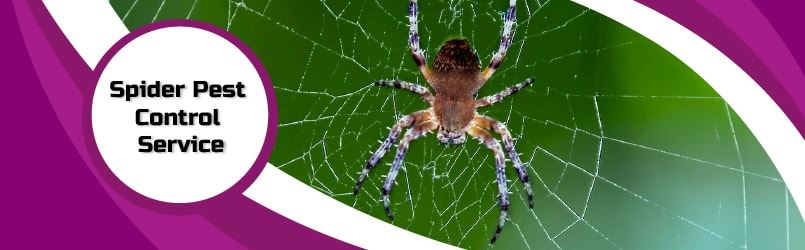 Spider Control Services Canberra