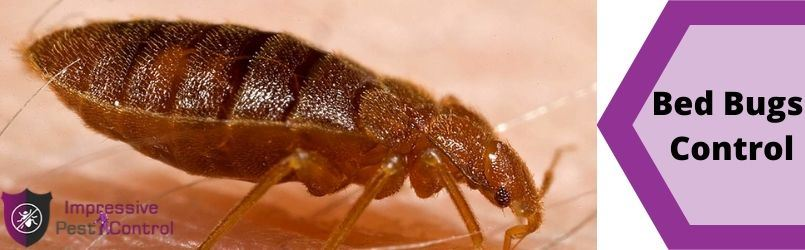 Bed Bugs Control Sandstone Point