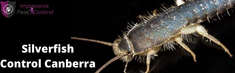 Silverfish Control Service Canberra