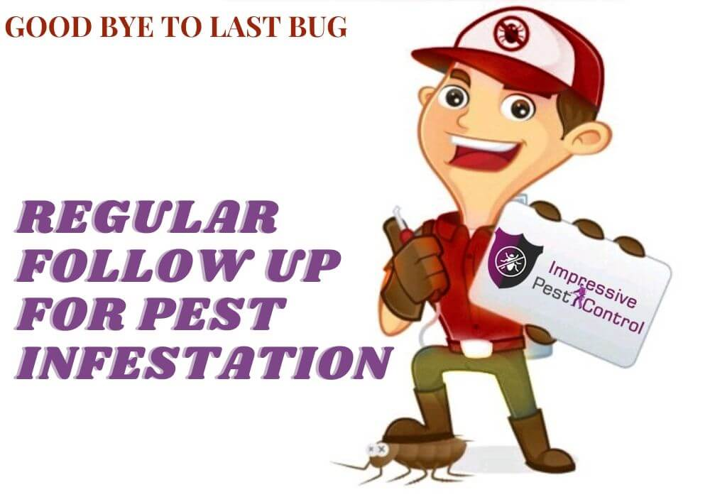 regular follow up for pest
