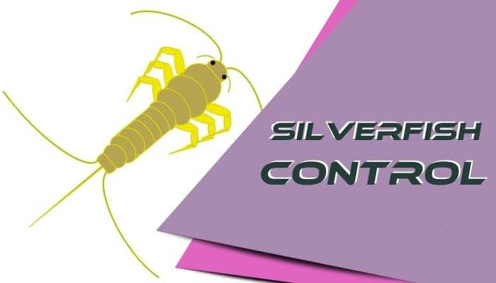 silverfish-control-thronlands