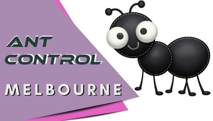ant-control-Melbourne