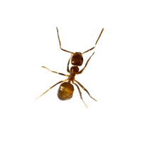 ant pest control Southport