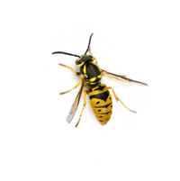 bee pest control Southport