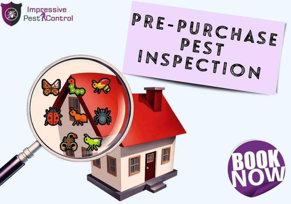 pre-purchase-pest-treatment