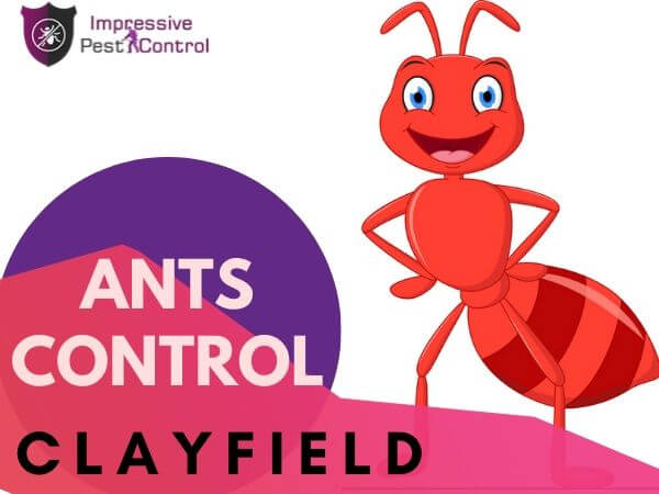 Ants Control Clayfield