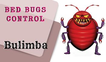 bed bugs control Bulimba