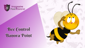 Bee Control Banora Point