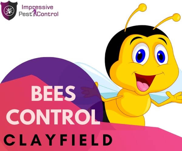 Bees and Wasps Control Clayfield