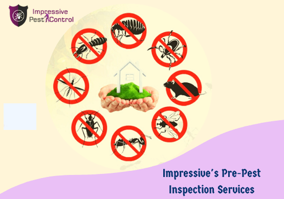 Pest Control In Indooroopilly