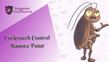 Cockroach Control Banora Point