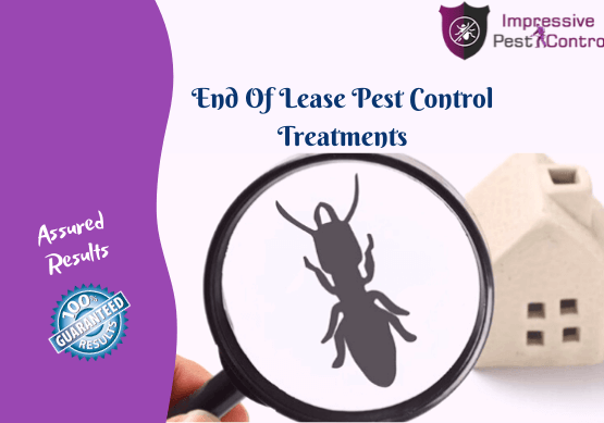 End Of Lease Pest Treatments