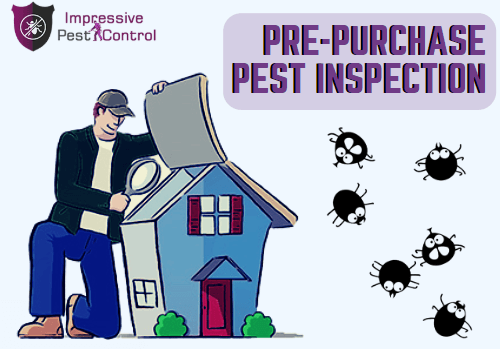 pre purchase pest inspection brisbane