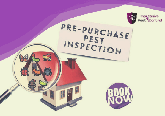 Pre Purchase Pest Inspections Control